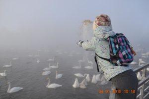 озеро светлое лебединное алтай